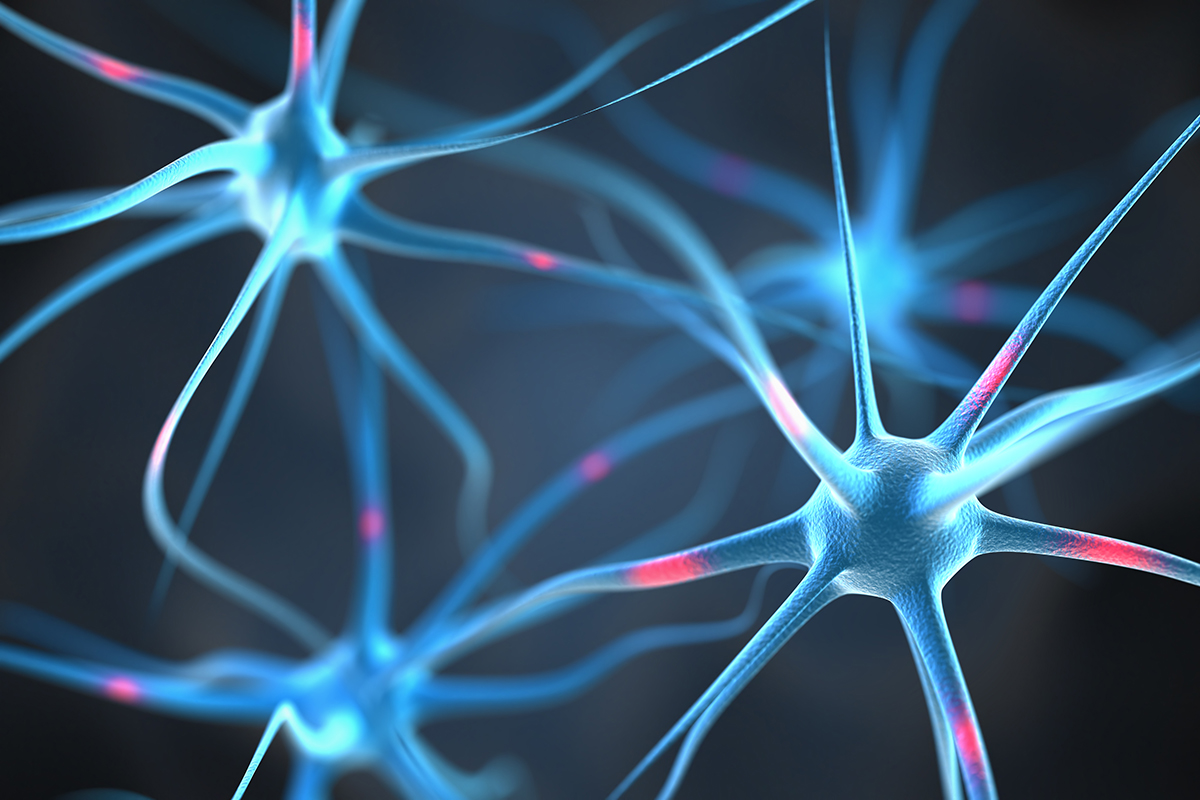 Neurons-in-the-brain